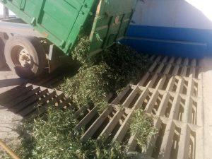 huile-olive-vierge-fabrication-benameji-14