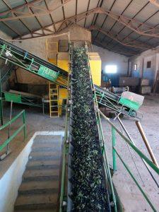 huile-olive-vierge-fabrication-benameji-4